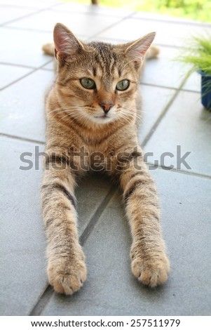 Cat relaxing on the balcony - stock photo