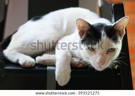 Cat relaxing on the chair looking at Camera - stock photo