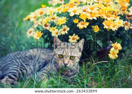 Cat relaxing on the grass near flowers