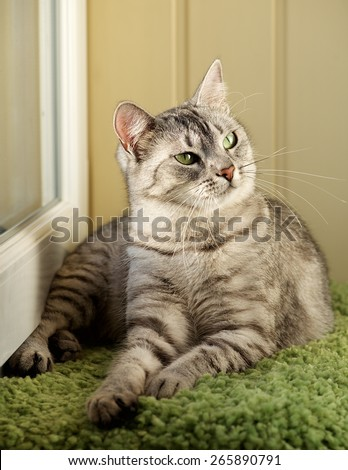 Cat, resting cat in natural warm blur background, young playful cat, domestic cat, relaxing cat, cat resting, elegant cat in low iso photo, noise - stock photo
