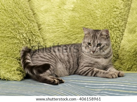 Cat, resting cat on a sofa in green background, cute funny cat close up, young playful cat on a bed, domestic cat, relaxing cat, cat playing at home, elegant cat - stock photo