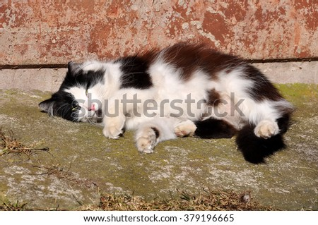 cat resting in a funny pose in the sun, cat basking in the sun and sunbathing - stock photo