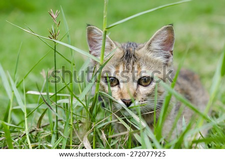 Cat resting in grasses