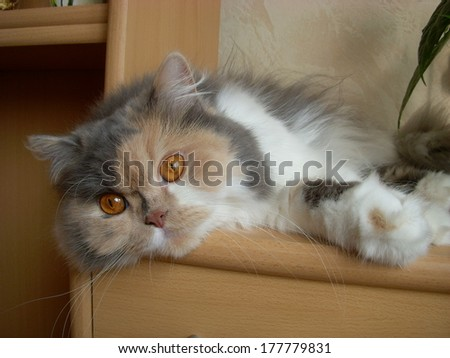 Cat resting in the cabinet - stock photo