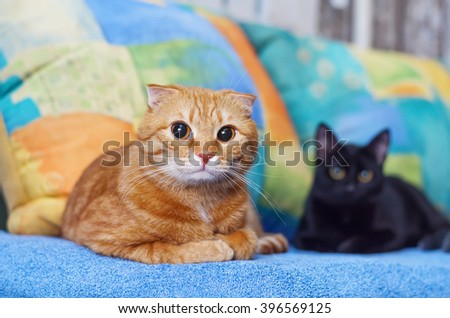 Cat resting on a sofa with a black cat. - stock photo