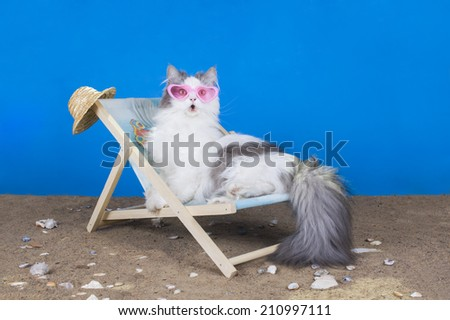 cat resting on a sun lounger - stock photo