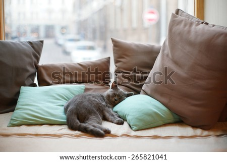 Cat resting on pillows