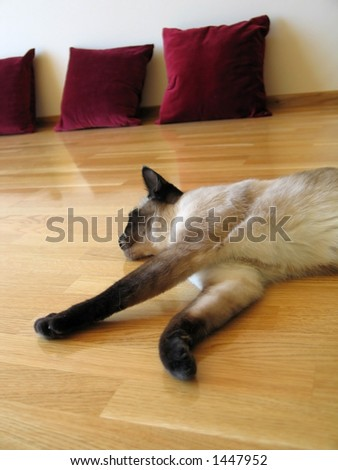 Cat resting on the floor - stock photo