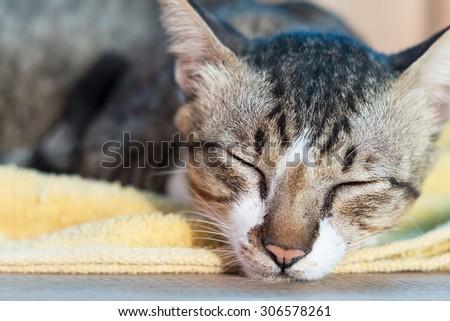 Cat resting on yellow carpet - stock photo