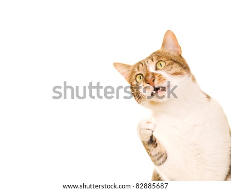 Cat rises its hand and want to catch something - stock photo