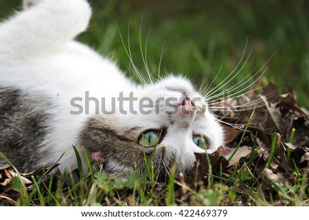cat rolling on the ground - stock photo