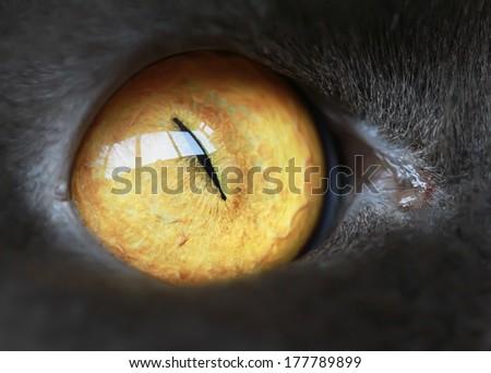 cat's-eye - stock photo