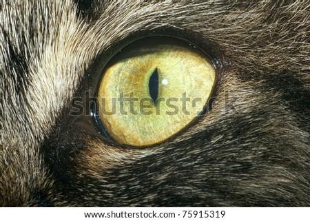 Cat's eye close up - stock photo