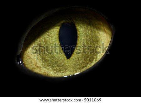 cat's eye close-up with vertical pupil