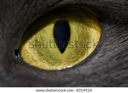 cat's eye close-up with vertical pupil - stock photo