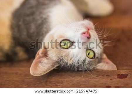Cat's eyes - stock photo