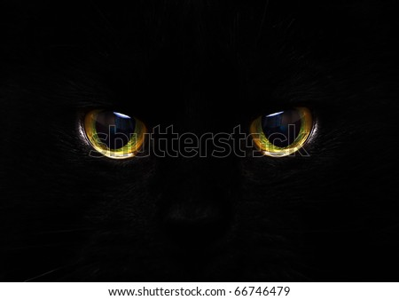 cat's eyes glowing in the dark - stock photo