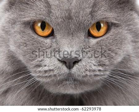 cat's face closeup - stock photo