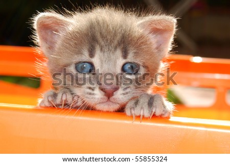 Cat's face while trying di uscire from the basket - stock photo