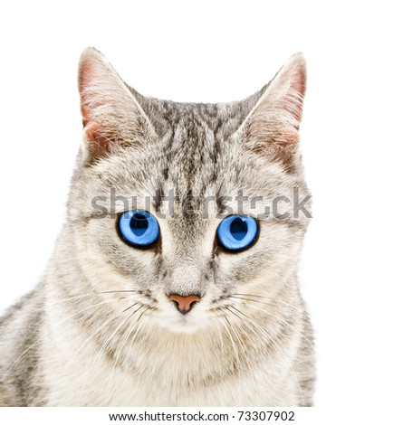cat's head in close-up - stock photo
