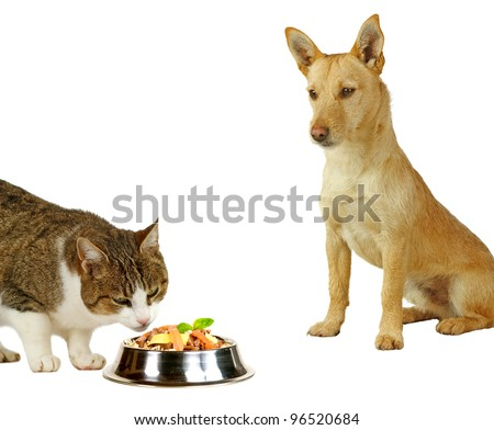 Cat´s only, a cat is eating a delicious meal  while a dog is only looking - stock photo