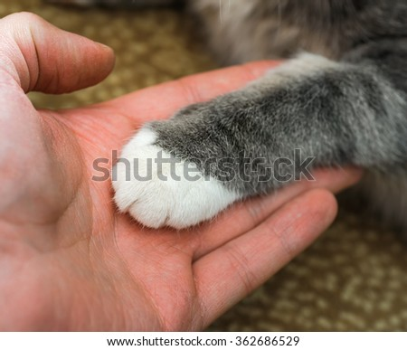 cat's paw in a mans palm. human to lend a helping hand. focus on a edge of cats paw - stock photo