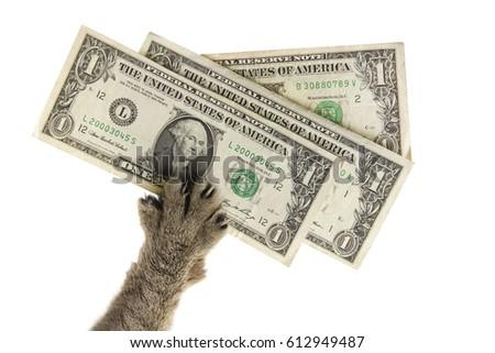 cats paw pulls three dollars stock photo edit now 612949487