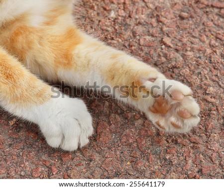 Cat's paws - stock photo