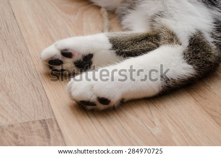 cat's paws on laminate