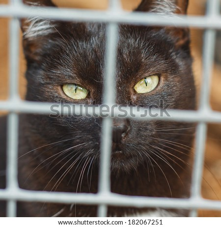 Cat`s shelter - stock photo