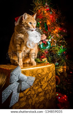 Cat Santa - stock photo