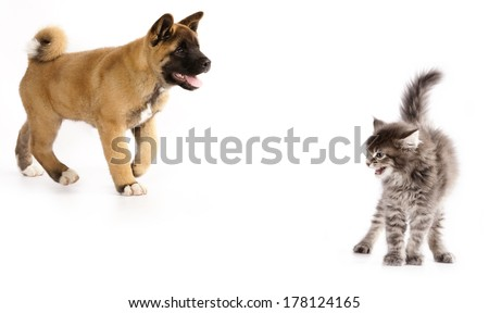 cat scared puppy  - stock photo