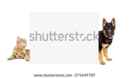 Cat Scottish Straight and a German Shepherd puppy peeking from behind banner, isolated on white background - stock photo