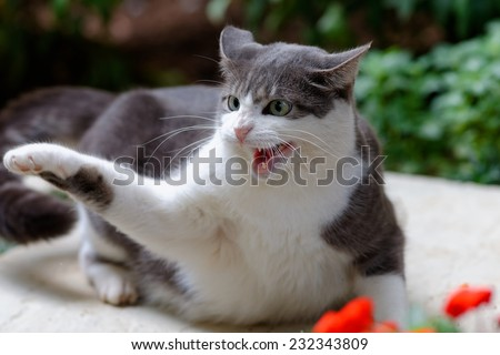 Cat scratching dog in Johannesburg South Africa - stock photo