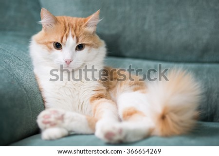 Cat seat on the sofa