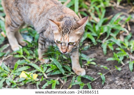 Cat see and catching a mouse on green grass - stock photo