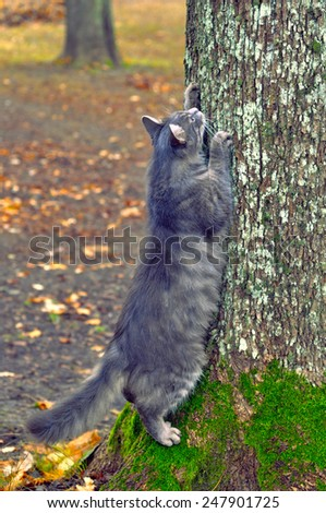cat sharpening its claws on a tree trunk - stock photo