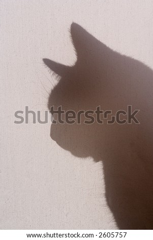 Cat silhouetted behind backlit cancas screen shade - stock photo