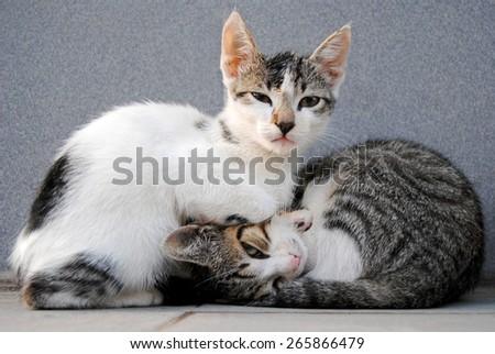 Cat Sisters - stock photo