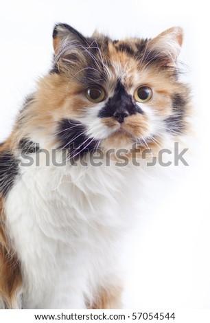 Cat sit near the window - stock photo