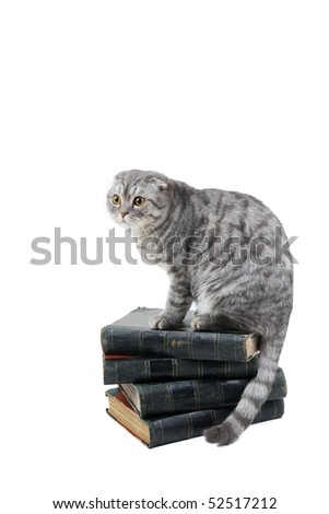 Cat sit on the books - stock photo