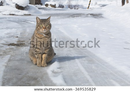 cat  siting and waiting on the road - stock photo