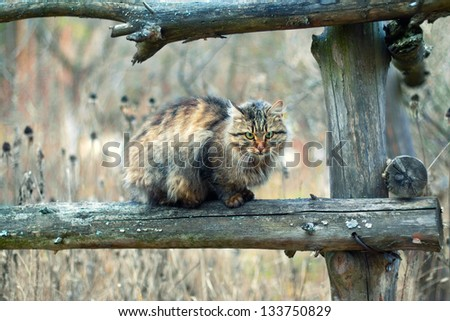 Cat siting on a fence - stock photo