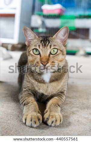 Cat sits and staring to the camera - stock photo
