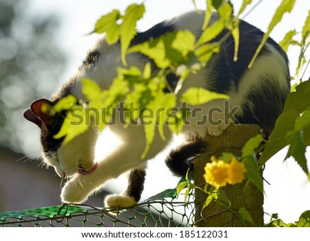 Cat sits atop a fence - stock photo