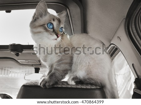 Cat sits in the car on passenger sitting