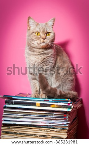 Cat sits on stack of newspapers - stock photo