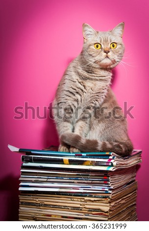 Cat sits on stack of newspapers on a table - stock photo