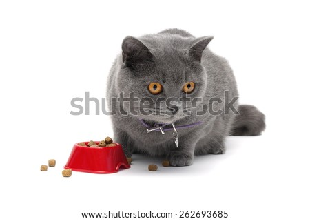 cat sitting around a bowl of food on a white background close-up. horizontal photo. - stock photo