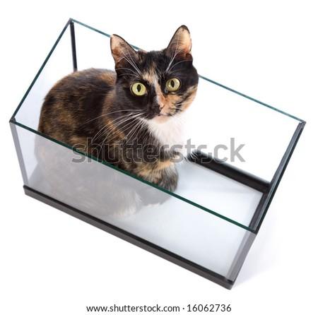 cat sitting at aquarium on white - stock photo